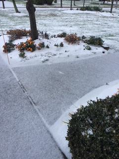 Saturday at 4:30 37 degrees and snow!